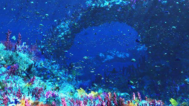 Underwater Wallpapers Hd Free Download Underwater Wallpaper Underwater Images Underwater Background