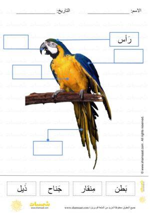 قراءة و وضع المسميات على الرسم أجزاء جسم الببغاء فوتوغرافي قراءة كلمات علوم للصغار 1 Animals Parrot Bird