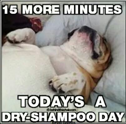 Dog Sleeping On Back 15 More Minutes Today S A Dry Shampoo Day