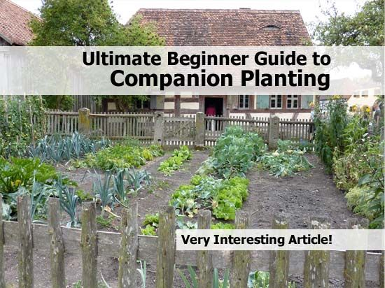 Ultimate Beginner Guide To Companion Planting Companion Planting