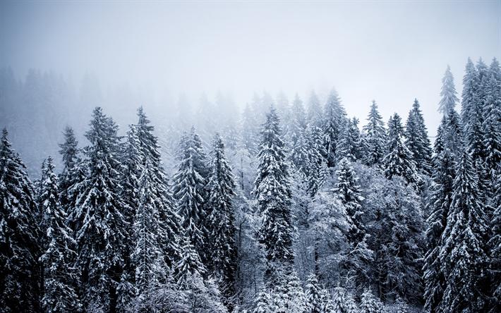 Scarica Sfondi Inverno Paesaggio Foresta Neve Innevate Alberi