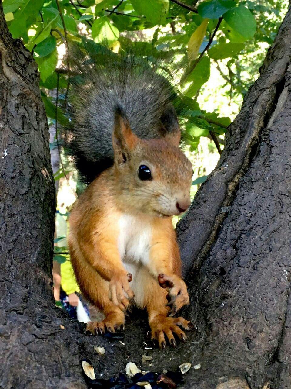 Pin by Антон Белозёров on Squirrel Animals, Squirrel, Rabbit