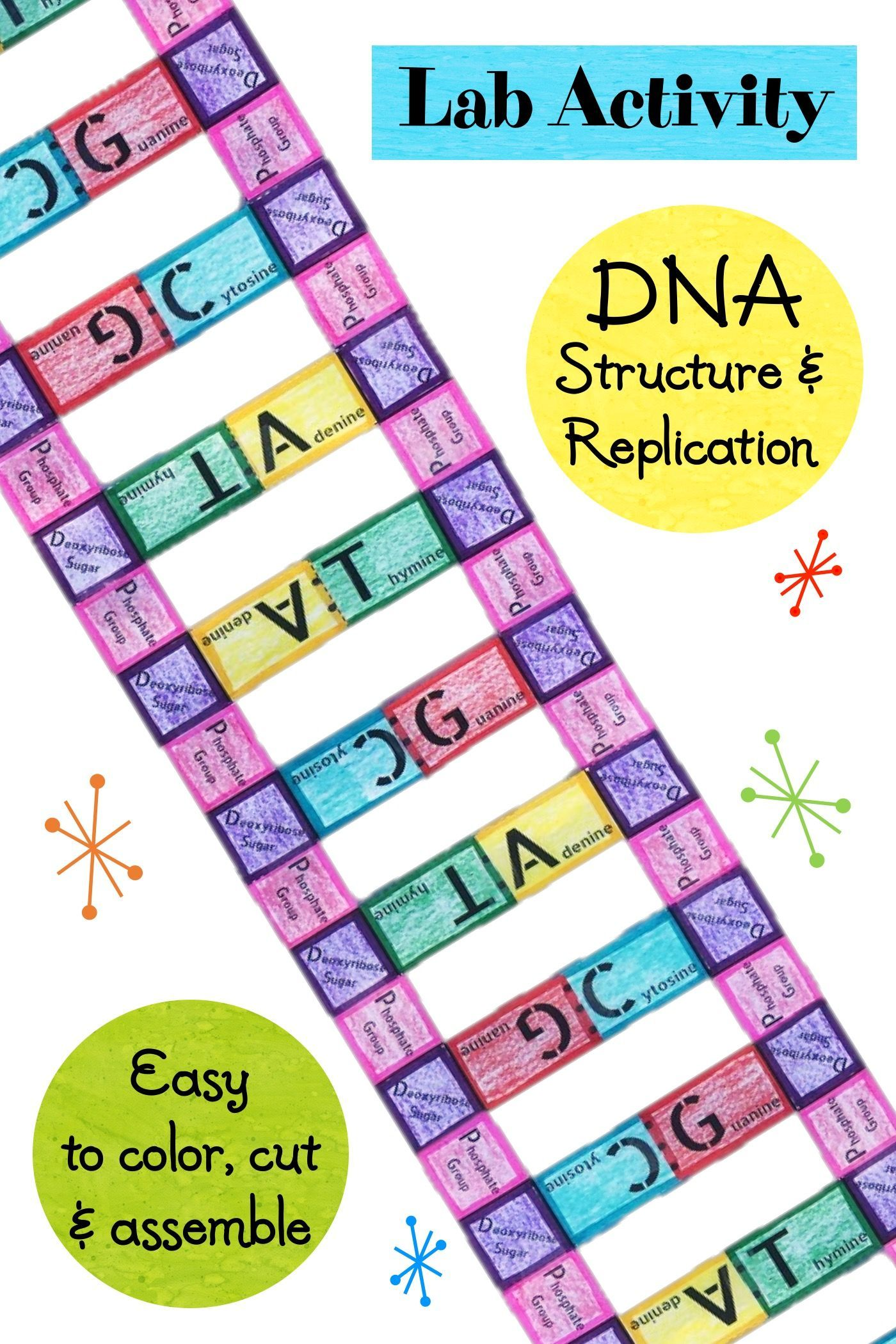 DNA Structure and Replication Lab Activity Worksheet   Lab activities [ 2100 x 1400 Pixel ]