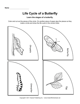 Printables Butterfly Life Cycle Worksheet 1000 images about life cycle butterfly on pinterest cycles animal habitats and plants