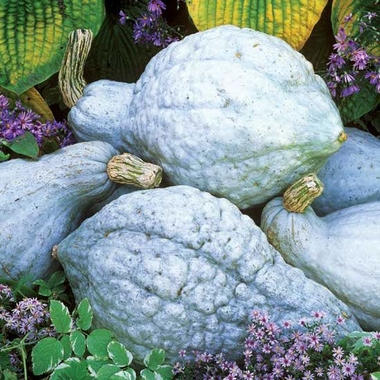 Top Winter Squash Varieties for the Self-Sufficient Garden - Organic Gardening - MOTHER EARTH NEWS