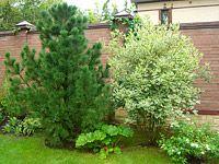 Озеленение участка в Москве - купить газон для озеленения