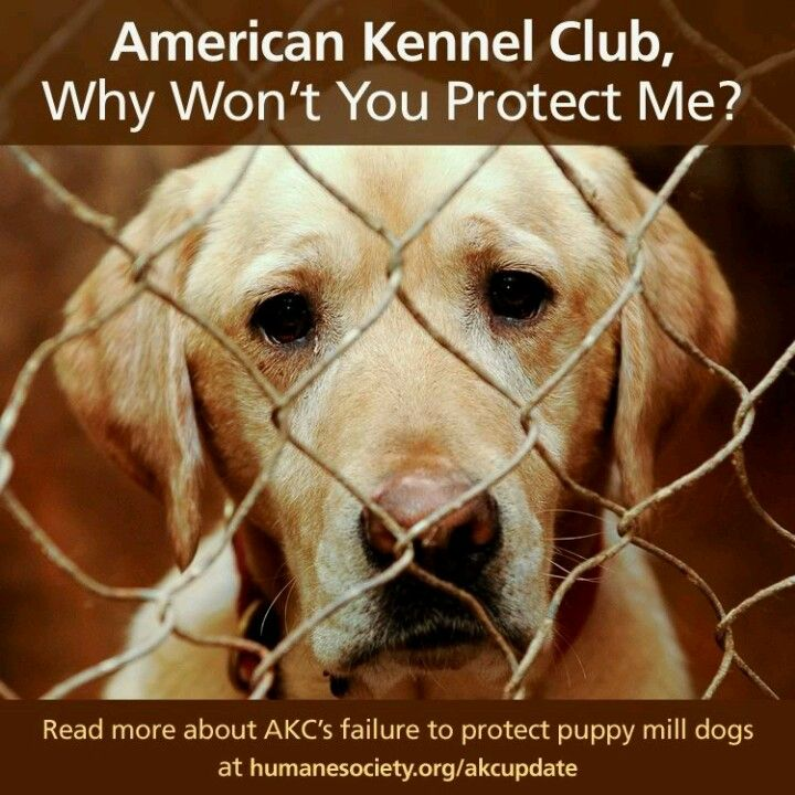 Help Stop Puppy Mills With Images American Kennel Club Puppy Mills Puppies