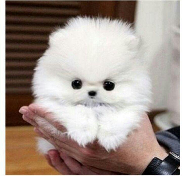 So Cute Cute Animals Cute Baby Animals Cute Dogs