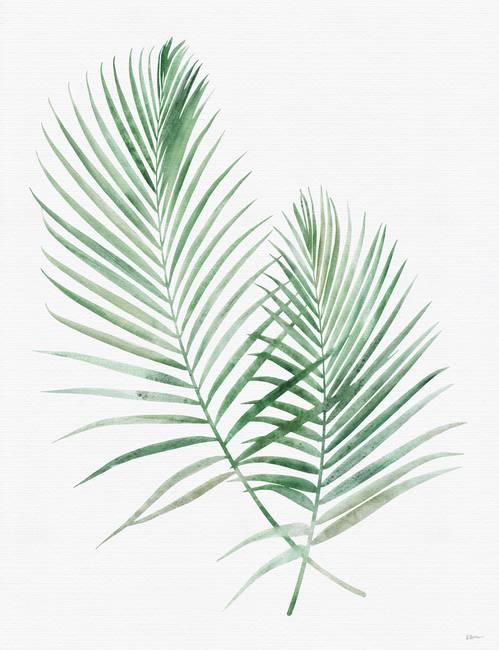 Arecaceae Leaf Frond Coconut Tree Palm Unlimited Download Kisspng Com Bunga Daun Latar Belakang