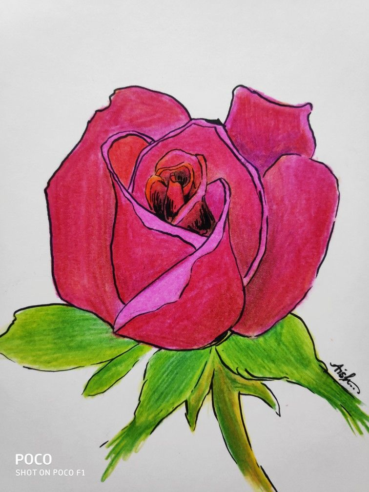 Easy Rose Petals Drawing Woth Color Pencil Pencil Color Easydrawing Flowers Rose Basic Love Rose Petals Drawing Simple Rose Roses Drawing
