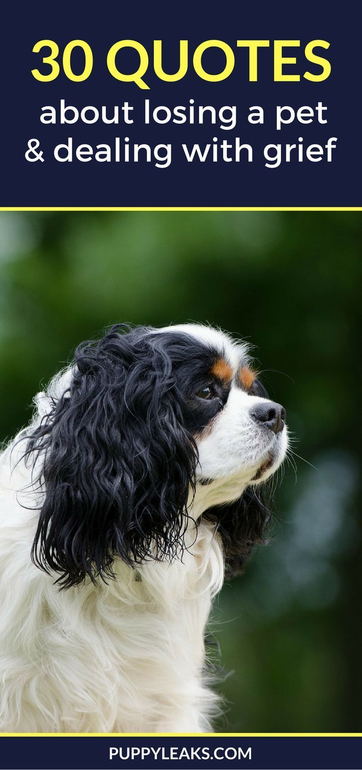 Losing A Dog Quotes 30 Powerful Quotes About Losing A Dog & Dealing With Grief  Pet