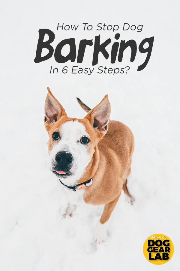 How To Stop Dog Barking In 6 Easy Steps? | Pet Accessories | Stop