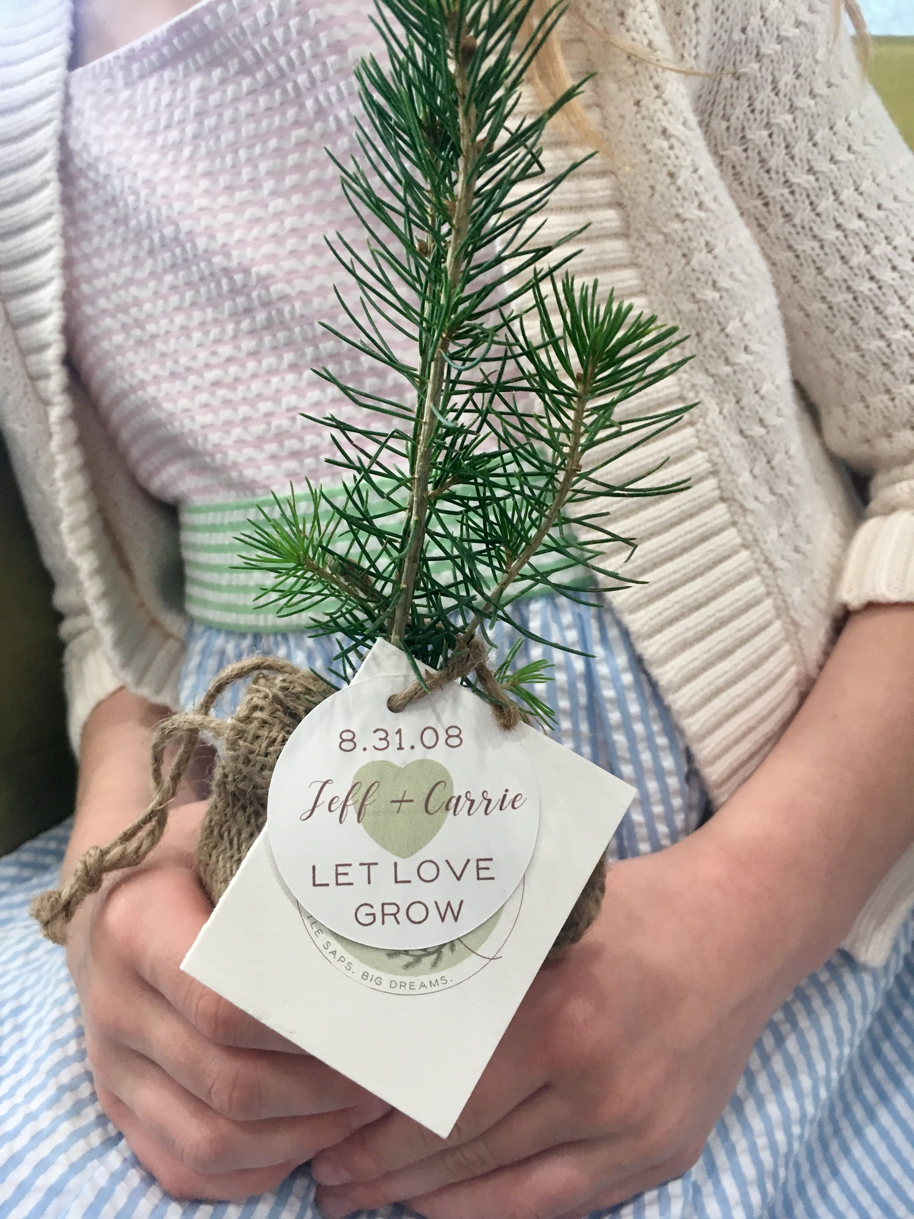 Little Saps Tree Seedling Favor For Weddings Baby Showers And