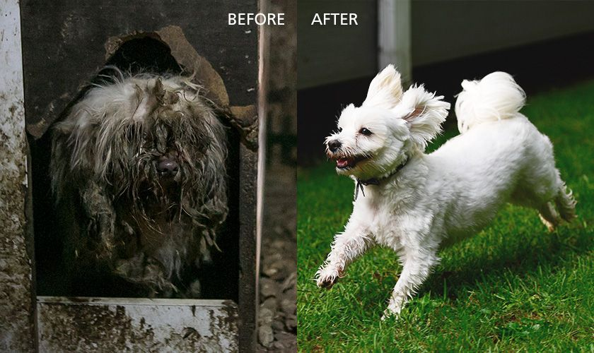 In 2017 Humane Society International Saved This Dog From A South Korean Dog Meat Farm Meat Farms Humane Society Animal Abuse