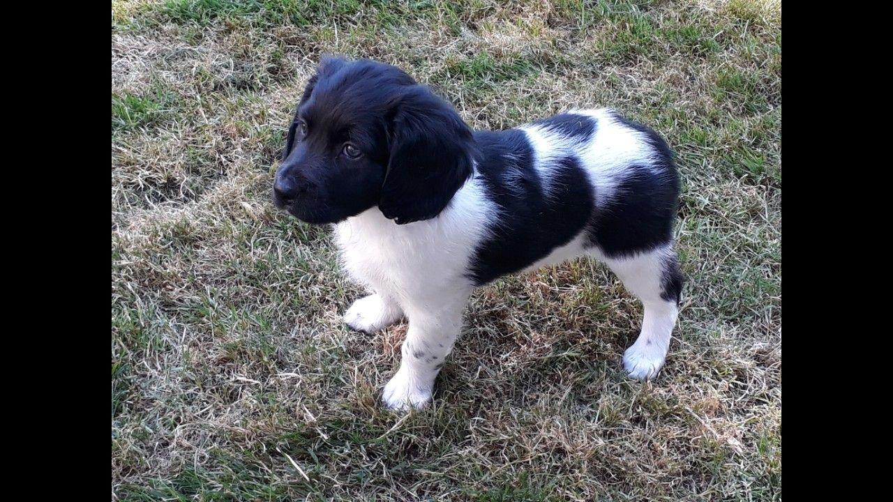 Jerke As Pup Fan 7 Wike Rare Dog Breeds Rare Dogs Pup