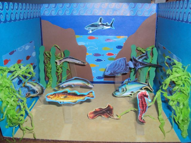 Maqueta escolar en papel ecosistema marino cosas para for Piletas de agua salada en zona sur