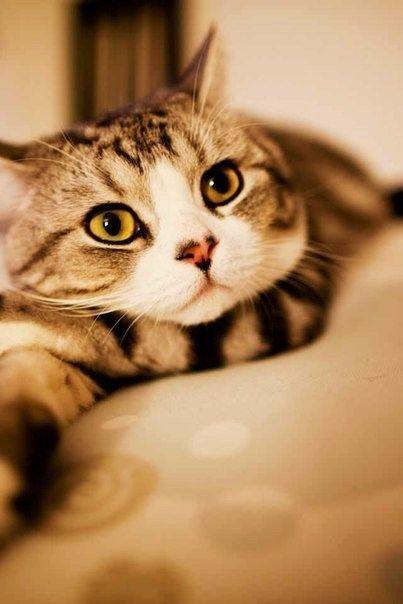 Cat Very Cool Photo Blog Cats Cute Cat Breeds Cute Cat
