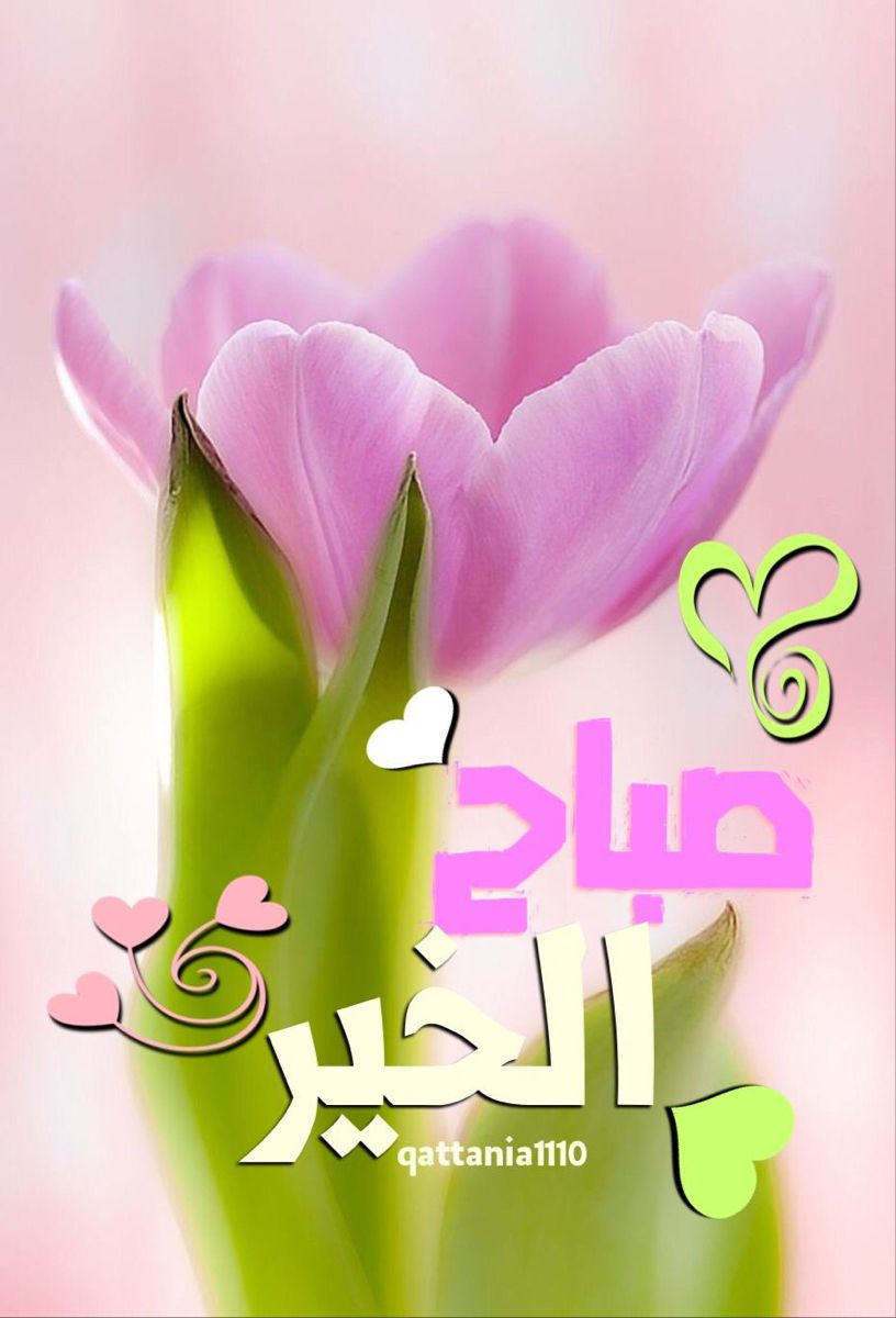 صباح الخير Good Morning Arabic Morning Greeting Good Morning Photos