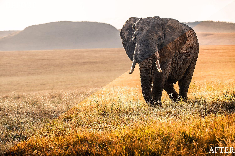 Lightroom Presets C Wildlife Ad Paid Sponsored Wildlife Presets Lightroom In 2020 Animals Elephants Photos Animal Wallpaper