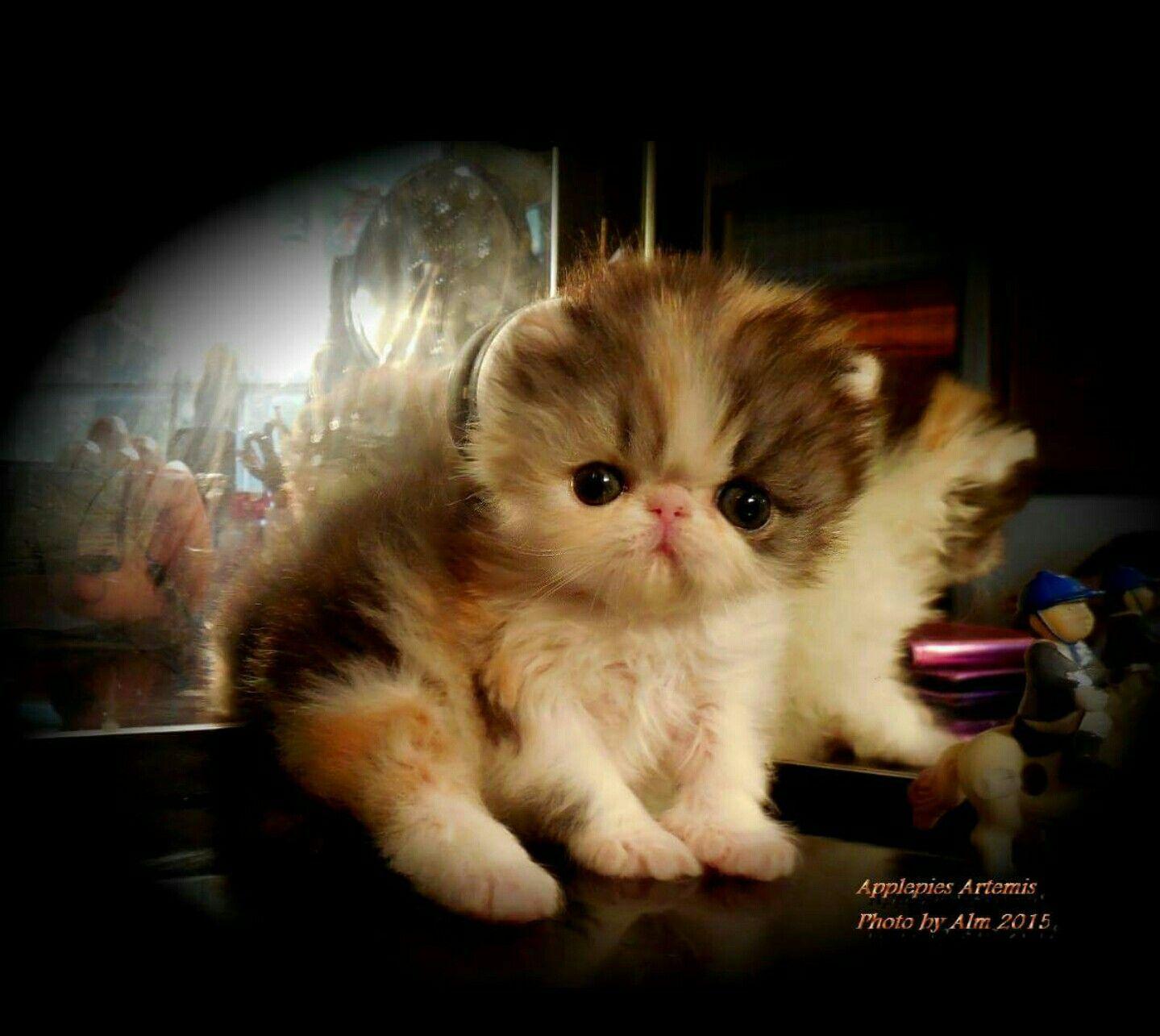 Artemis 4 Weeks N 5 Days Old Carmen Ruggiero Kittens Cutest Cute Animals Cool Cats