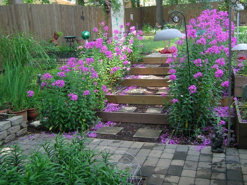 Phlox In Garden Tall Garden Phlox Along Garden Steps Photo