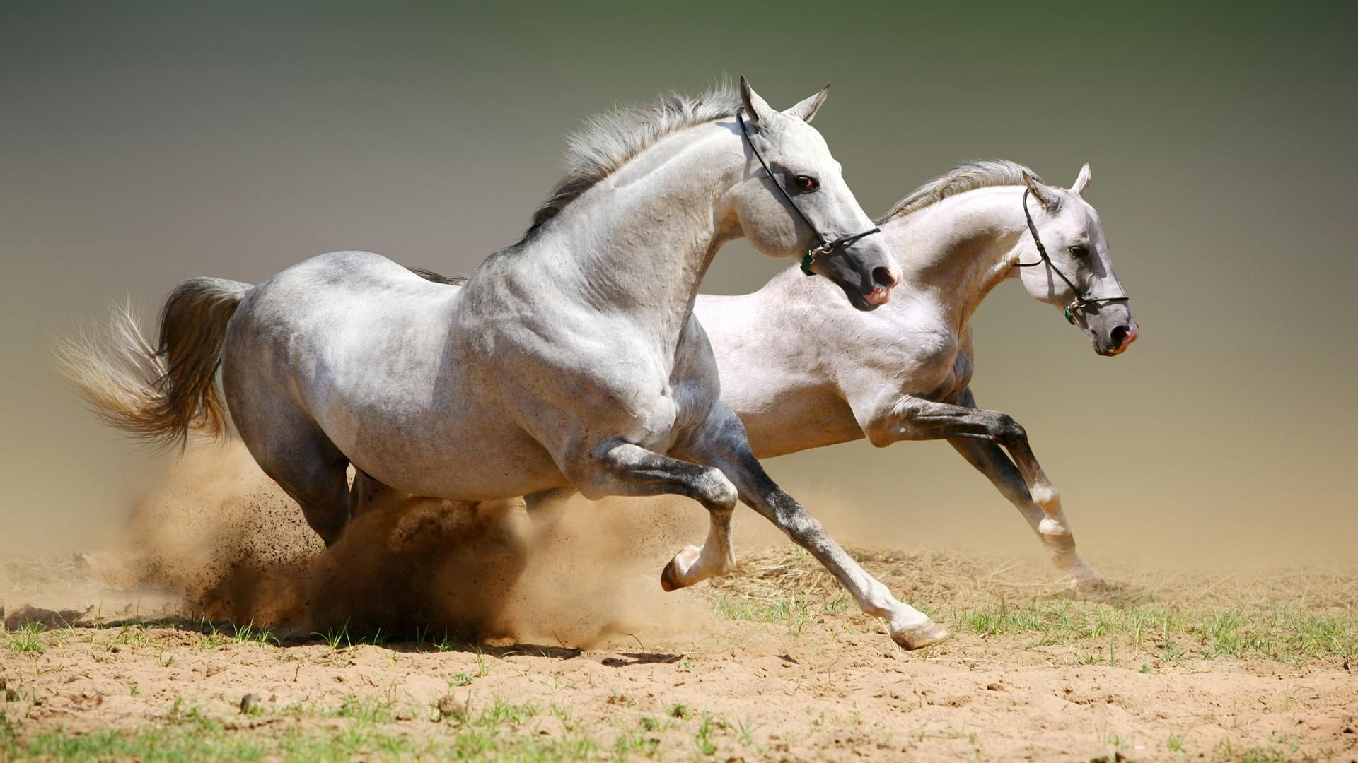 Cool Wallpaper Horse Lightning - 0b1fac6288357d3af9e846282a45c759  Trends_759834.jpg