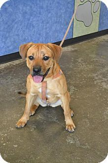 Pin By Lisa Barker On Lisa Barker Pets Dogs Black Mouth Cur