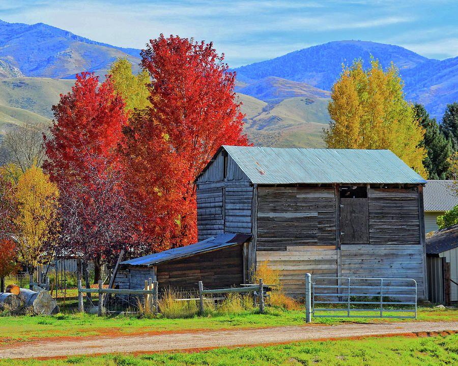 Peterson Barn In Autumn by DK Digital #autumnscenes