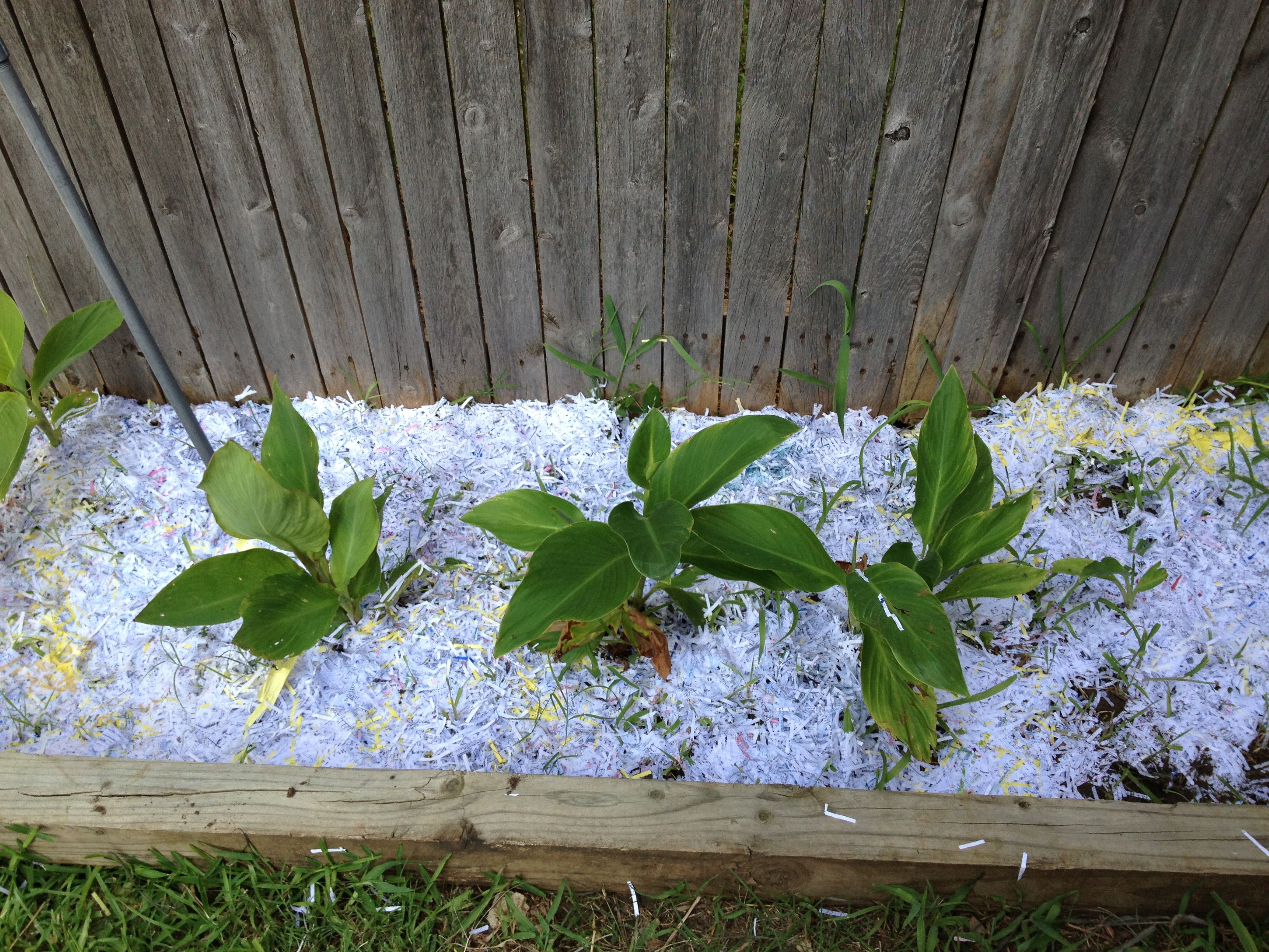 Weeds in flower beds spray - Diy Mulch Recycle Your Shredded Paper No Plastic Or Glossy Paper Place Shredded Paperthe Weedsmulchesflower Bedsplace