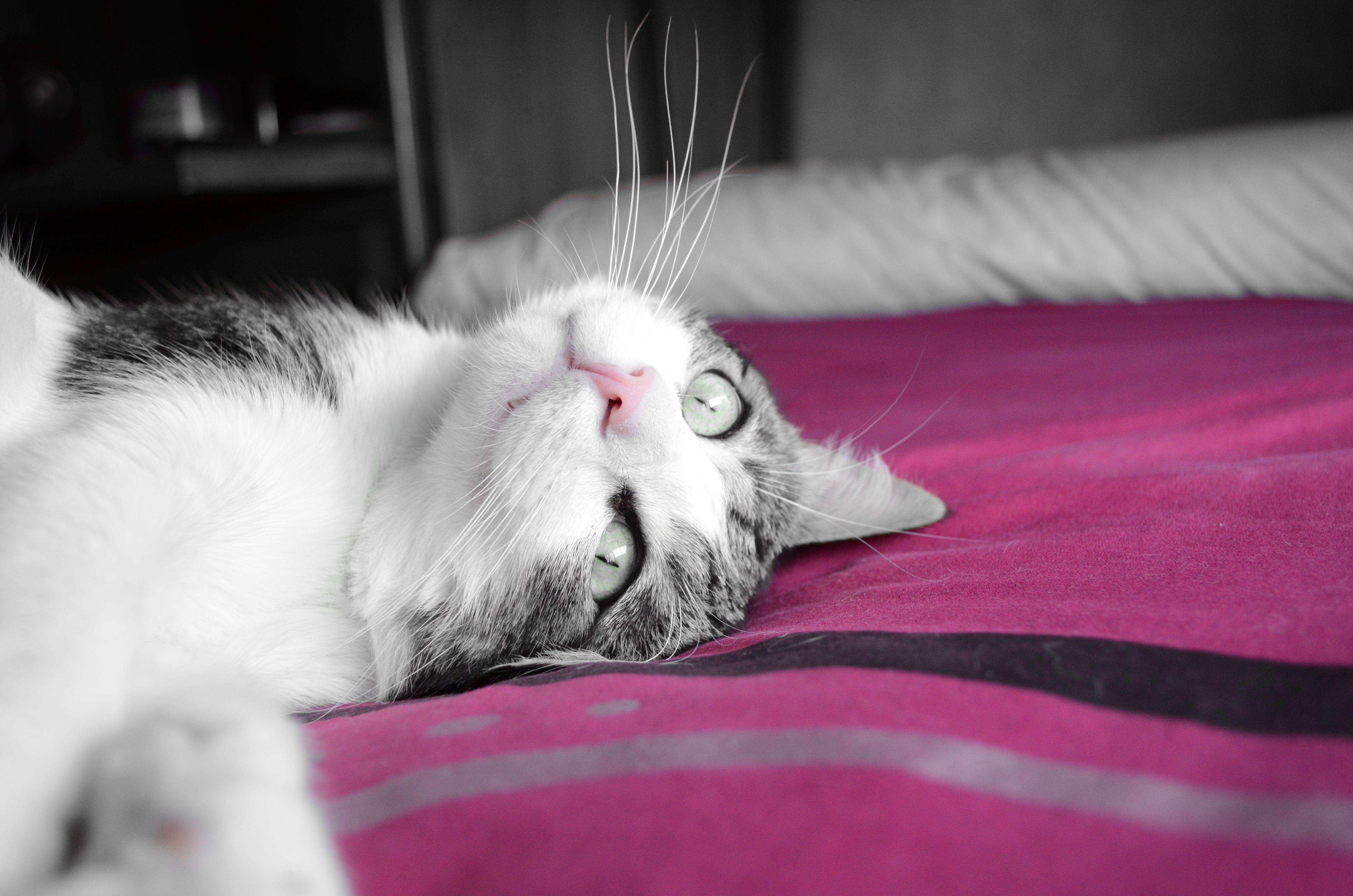 Mon petite chat