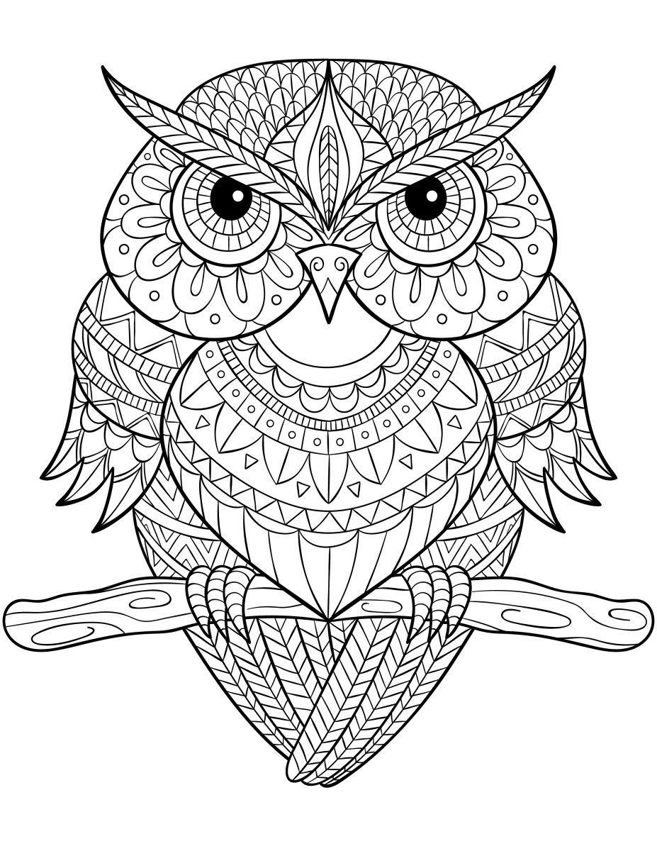 Coloriage complexe hiboux pour adulte à imprimer | Owl, Adult ...