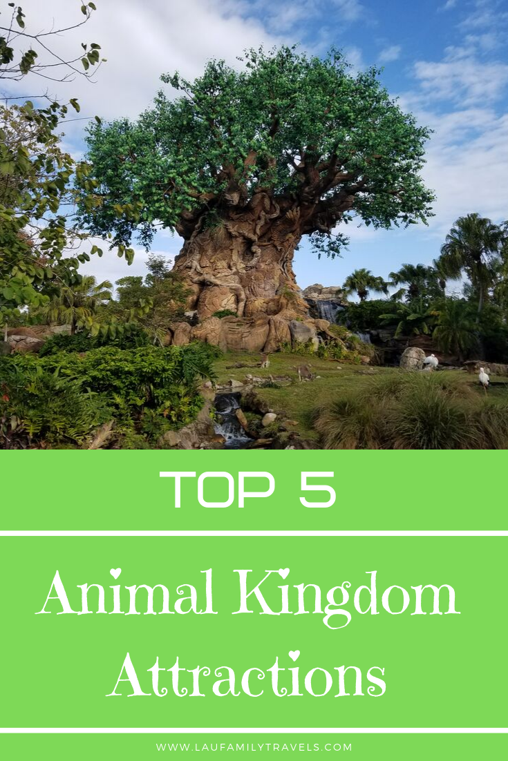 Top 5 Animal Kingdom Attractions #animalkingdom