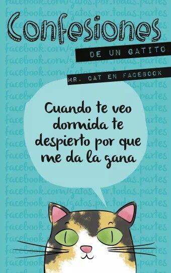 03d92fd4ca7 Dormida   Gato   Gatos, Cosas para gatos y Poemas de gato