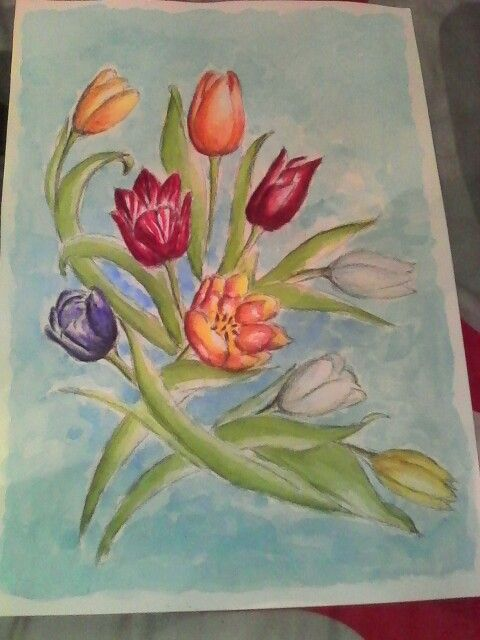 Tulips - graphite and watercolor on watercolor paper