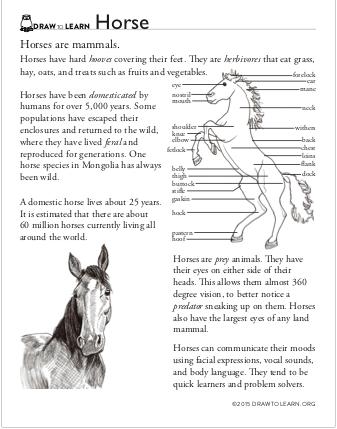 How To Draw A Horse Worksheet Dawn Pedersen Artist Sunflower Wall Art Horses Horse Art Drawing