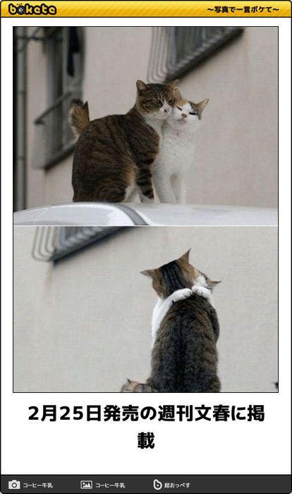 猫bokete ボケて 秀逸ボケ Naver まとめ Funny Animals I Love Cats Animals
