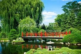 Willow bridge in Japanese Garden at Normandale Community College Bloomington, Minnesota