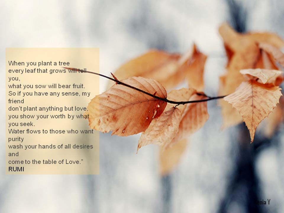 Image result for animated loving autumn quotes