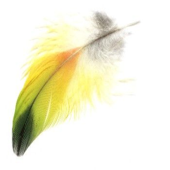 Using Canary Feathers Enables You To Bring More Light Joy Into