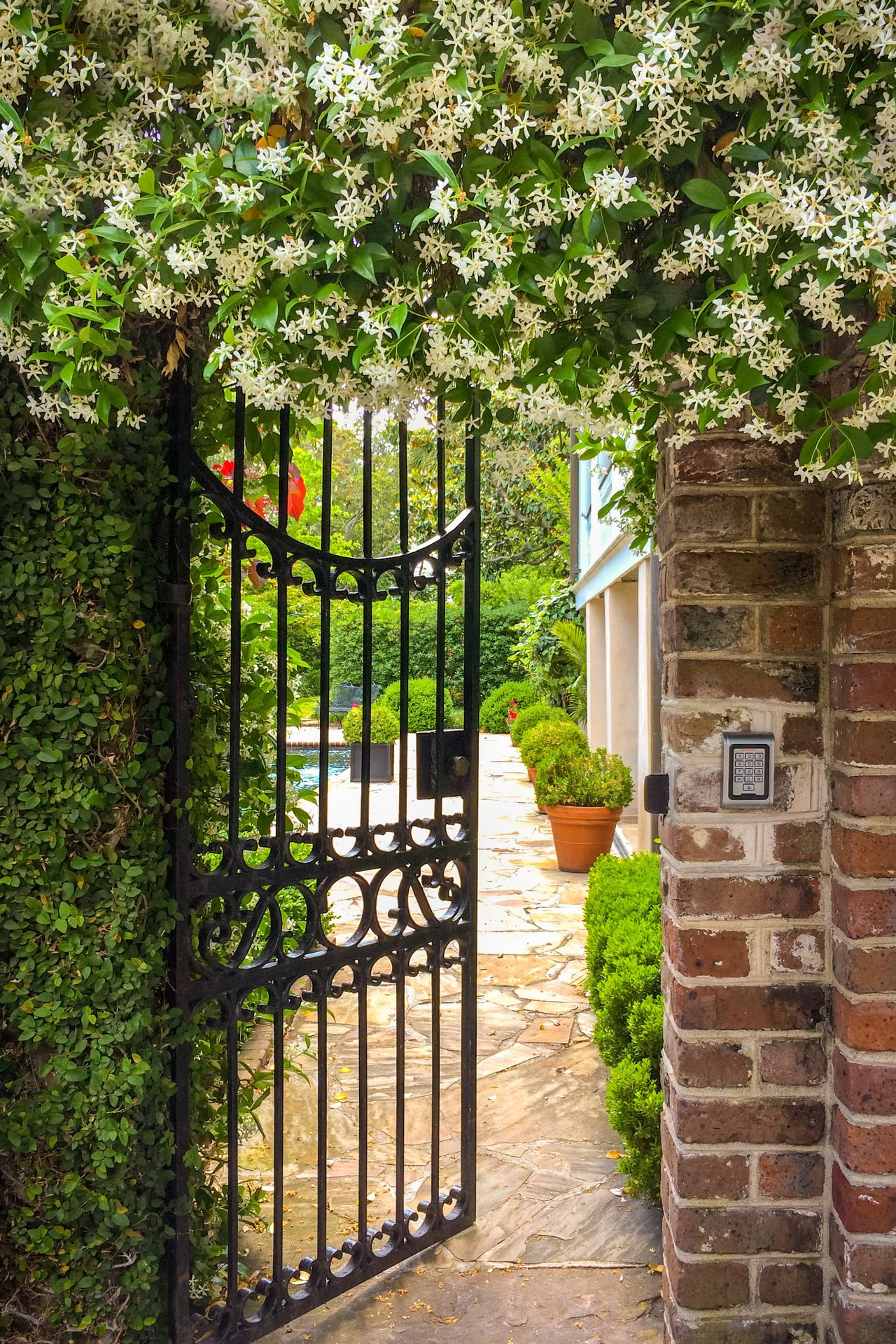 Garden Gate With Fragrant Jasmine Flowers Charleston Sc C Doug