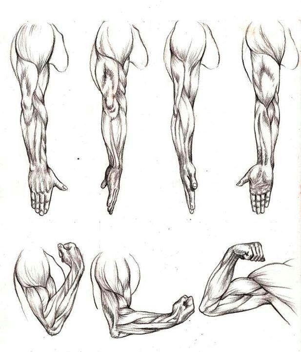 Brazo (hombre) | desenhos | Pinterest | Brazos, Anatomía y Dibujo