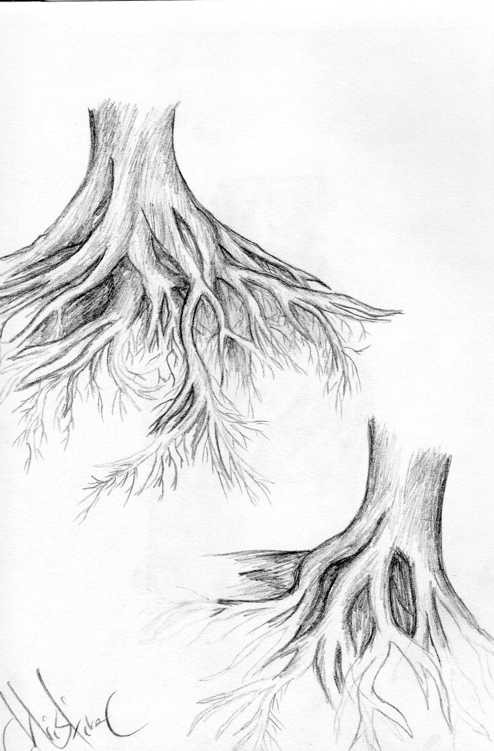 Artstation Tree Roots Christina Cavanaugh Tree Drawings Pencil Tree With Roots Drawing Roots Drawing