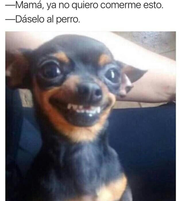 Pin De Sara En Memes V 3 Memes Divertidos Memes De Perros Chistosos Fotos De Perros Chistosos