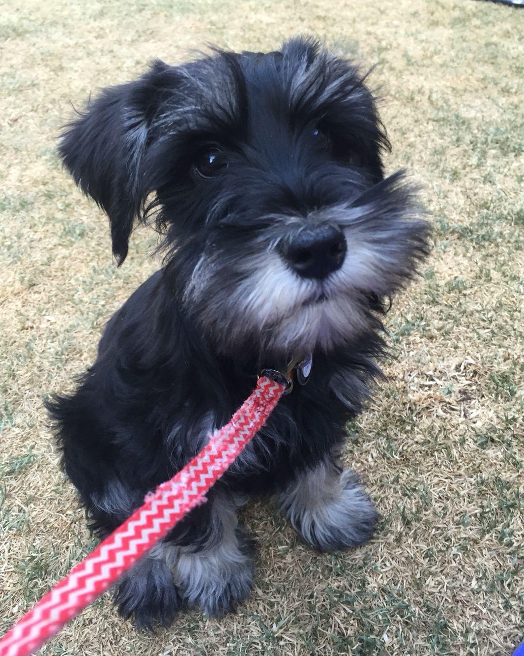 Puppy school Puppy training, Training your dog, Training