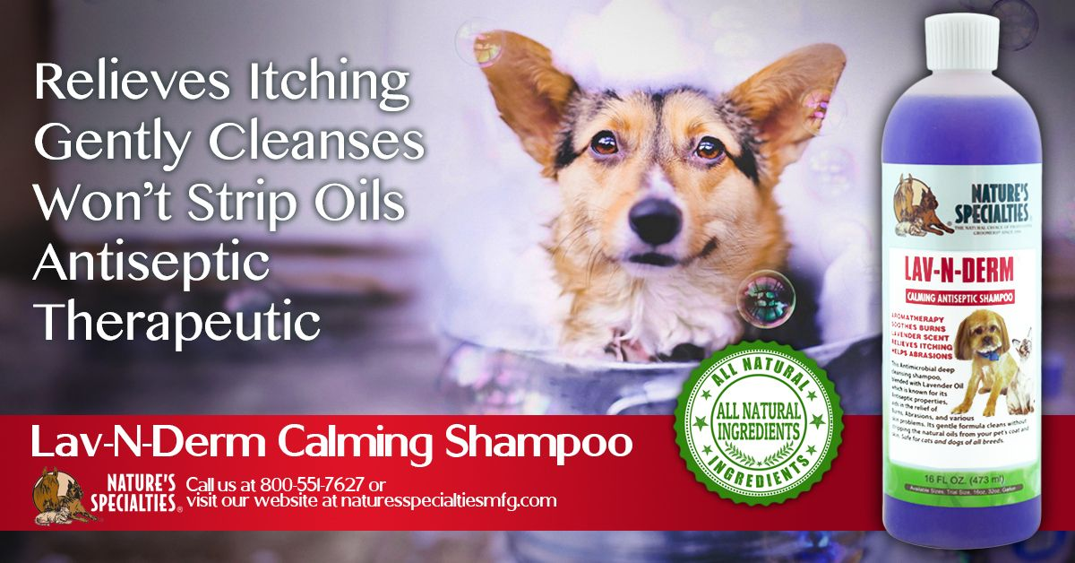 Looking for a calming, therapeutic shampoo for your pets that still gives them the professionally groomed look, feel and smell? Then check out our popular Lav-N-Derm shampoo, its like a day at the spa for your dog in a bottle! #dog #grooming #shampoo #lavender #theraputic #calm #love #life