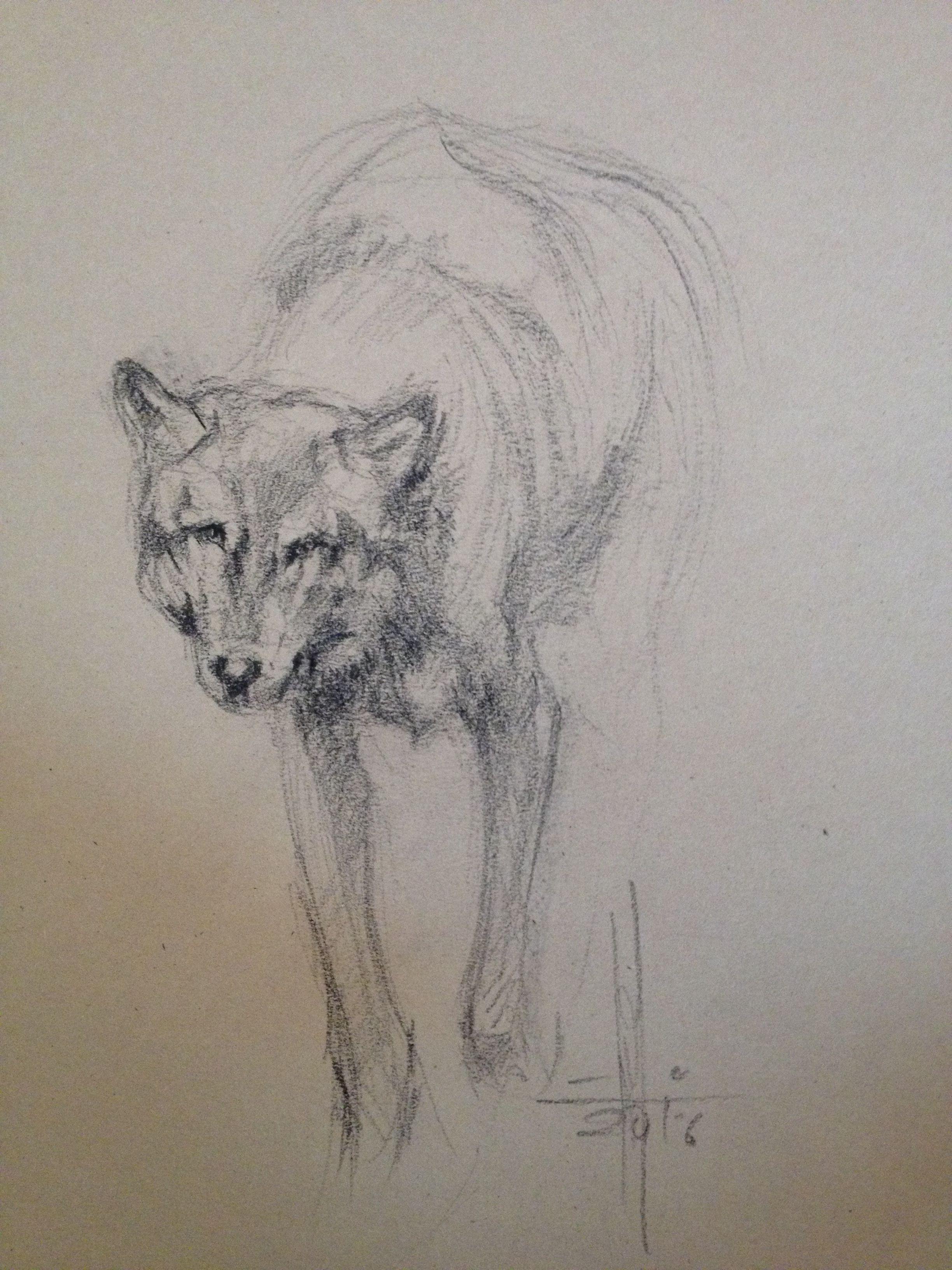 Resultado De Imagen Para Lobos Aullando Dibujos A Lapiz Jidiworkoutco