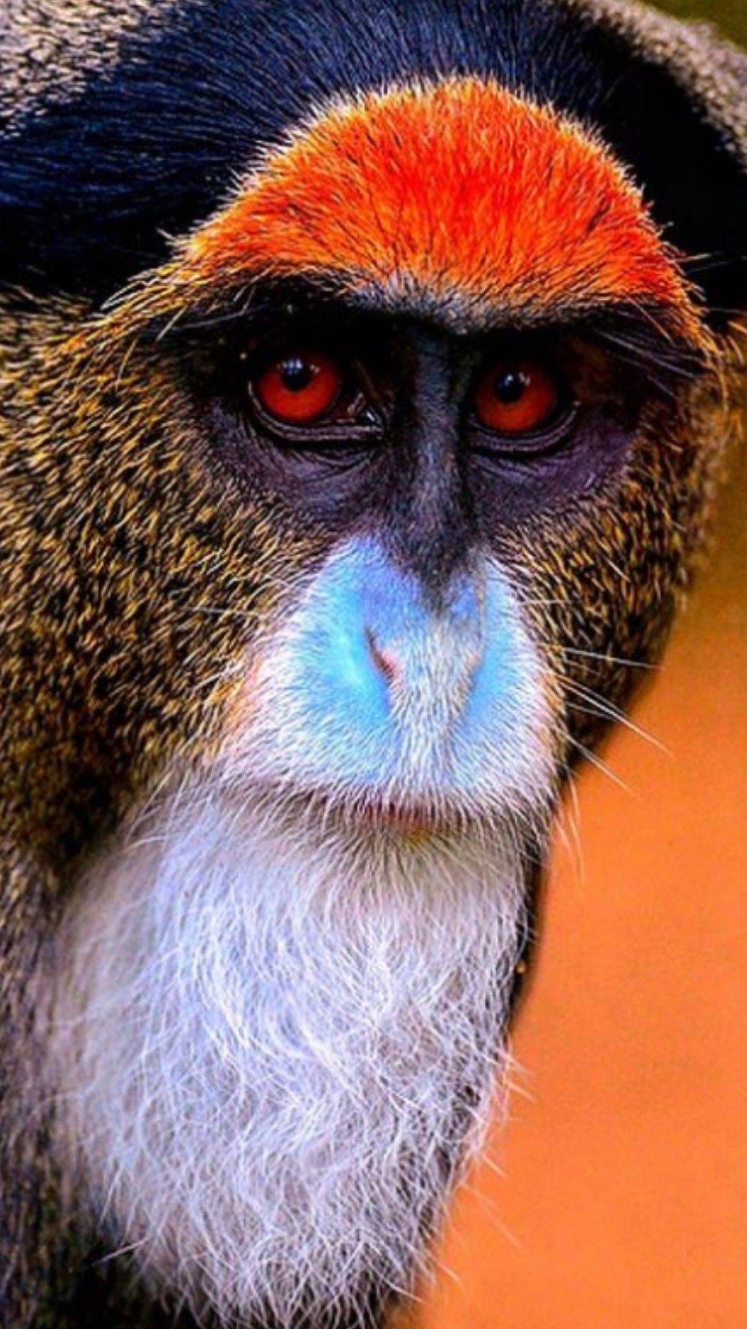 Pin by Kichi Kapizia on Primates Animals, Rare animals
