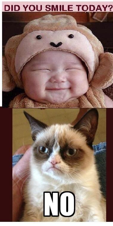 Grumpy Cat Hates Smiling Funny Grumpy Cat Memes Grumpy Cat Cat Memes