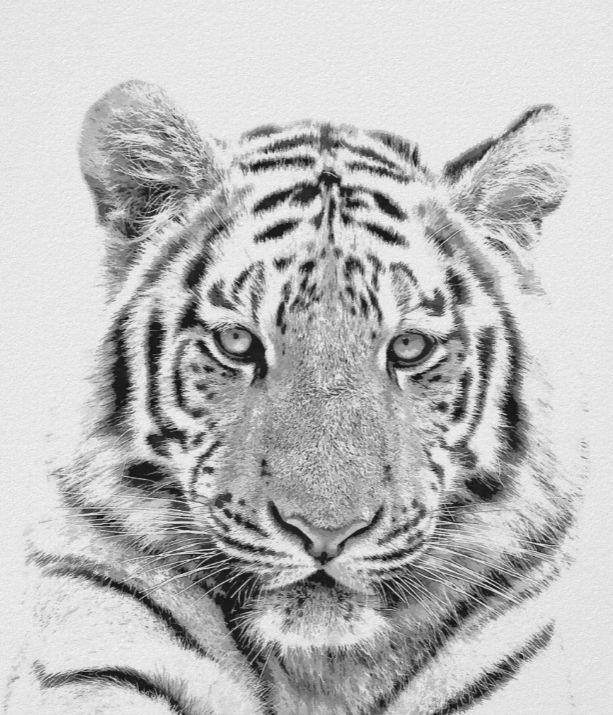 Black and White Tiger Portrait Poster | Zazzle.com