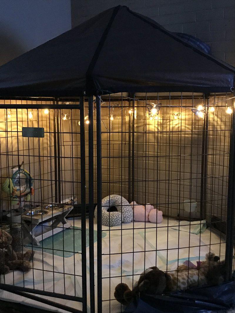 Mini Pig Indoor Spaces: Ideas & Inspiration